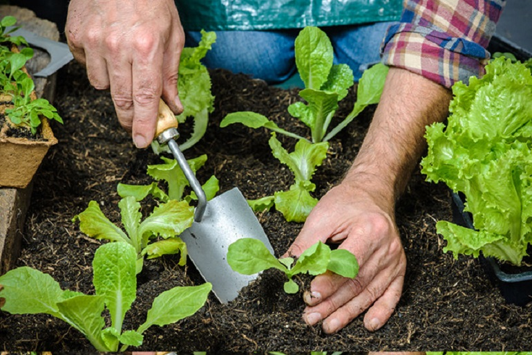 How-to-Start-Your-Own-Organic-Garden-at-Home