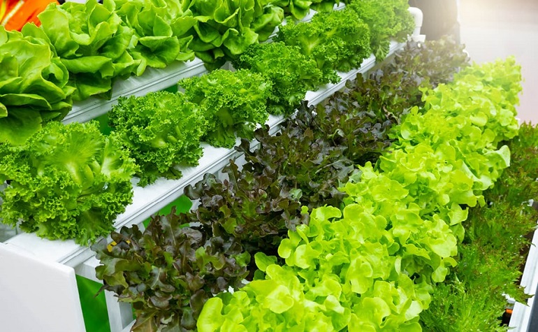 maximum-yield-soilless-agriculture-soil-based-hydroponics-gardening-horticulture